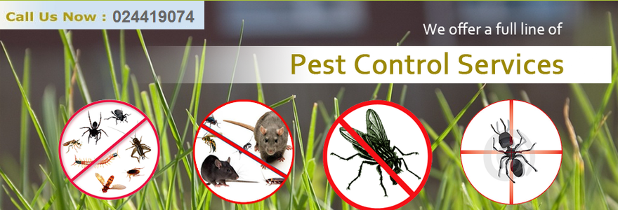 how to find the best pest control company